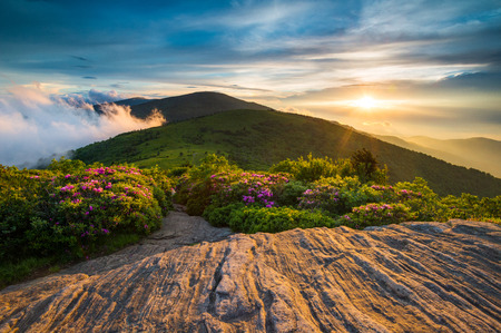 nc: Spring Flowers along Appalachian Trail at Sunset in Blue Ridge Mountains NC