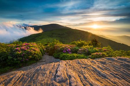 Blue Ridge Mountains: Spring Flowers along Appalachian Trail at Sunset in Blue Ridge Mountains NC