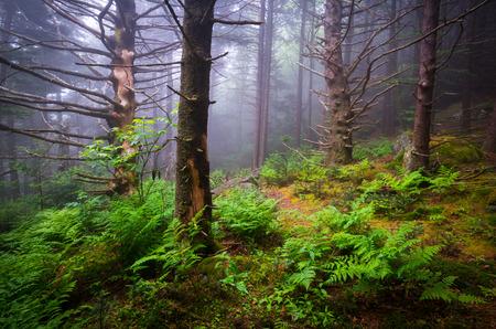 Scenic Forest Hiking Appalachian Trail North Carolina Natuur Landschap langs de grens van West-NC en Oost-TN