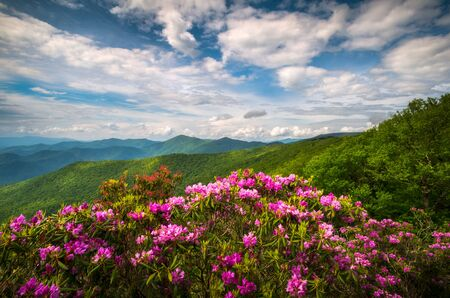 Mountain laurel and rhododendron flowers and dappled sunlight on the ridges near Craggy Gardens along the Blue Ridge Parkway above Asheville, NC. The month of June is an amazing time to be in the mountains, surrounded by beautiful spring flowers in bloom, dramatic skies, and the altitude of the mountain ridges always provides a nice break from the heat in the valleys below