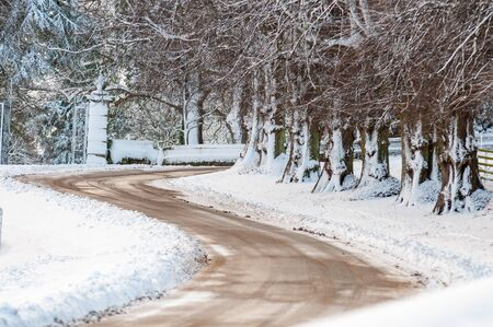 Snow covered tree trunks lining an S shaped bend in a road Stock Photo