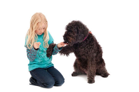 A black labradoodle begging a young blonde girl for a treat on a white studio background. Foto de archivo