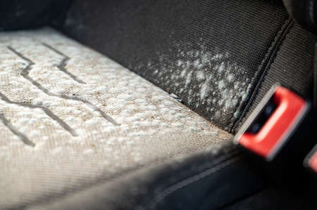Close up of mold on a car seat that has been laid up for several months Foto de archivo