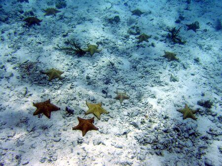 fish star: estrellas de mar sendero