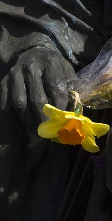 A yellow daffodil flower stands in contrast to a bronze statues hand