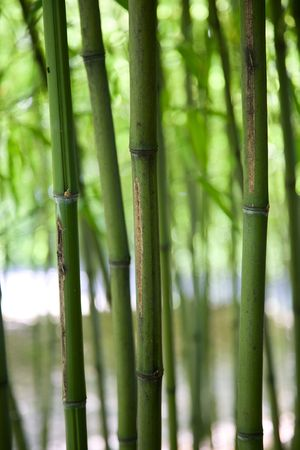 A shot of bamboo that transects the frame from top to bottom