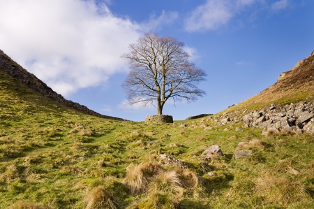 Iconic tree at Hadrians Wall Sycamore Gap