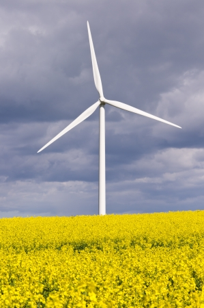 Wind turbine with rapeseed duel green energy photo