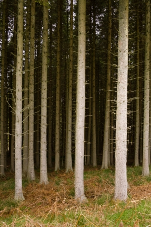 Dark forest at Kielder national park which has the largest man-made lake in northern europe and largest working forest in england covering 250 square miles Stock Photo - 14019548