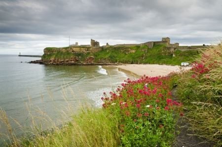priory: Wildflowers overlooking King Edwards bay and Tynemouth priory Editorial