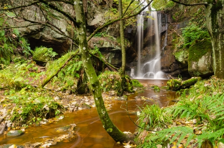 Roughting Linn is a little known secluded waterfall in woodland in north Northumberland