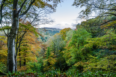 Allen Banks view in autumn over wooded valley as the leaves are turning orange photo