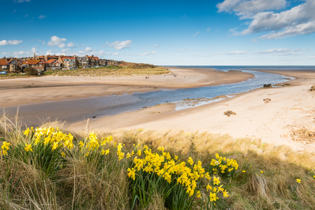 Alnmouth beach with spring daffodills as the River Aln meets the sea