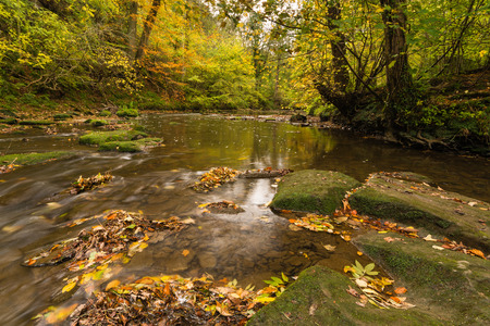 autumn colour: River Blyth in autumn flows through Plessey Woods Country Park located in south Northumberland and is particularly rich in colour during autumn
