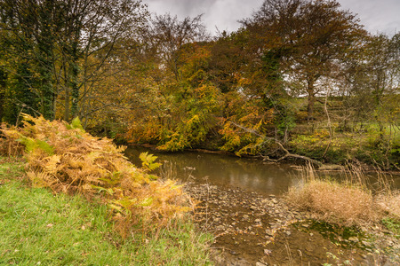 autumn colour: River Blyth flows through Plessey Woods Country Park located in south Northumberland and is particularly rich in colour during autumn
