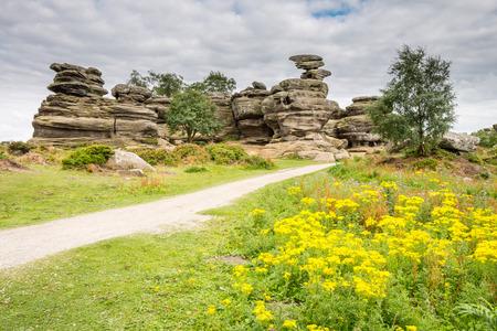 grinta: Fiori di campo a Brimham Rocks - Brimham Rocks su Brimham Moor nel North Yorkshire sono alterate arenaria, conosciuta come Millstone Grit, creando alcune forme drammatiche, molti dei quali sono stati nominati