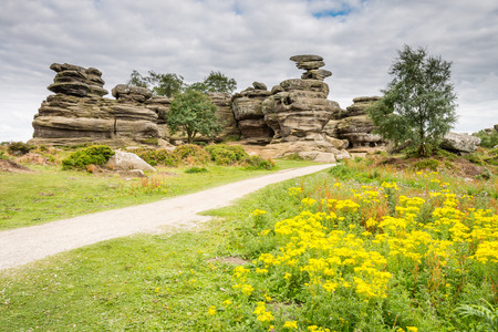 millstone: Wildflowers at Brimham Rocks - Brimham Rocks on Brimham Moor in North Yorkshire are weathered sandstone, known as Millstone Grit,creating some dramatic shapes, many of which have been named