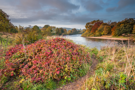 Autumn on River Tyne, which is formed when the Rivers North and South Tynes converge near Warden in Northumberland. Also known as, The Meeting of the Waters