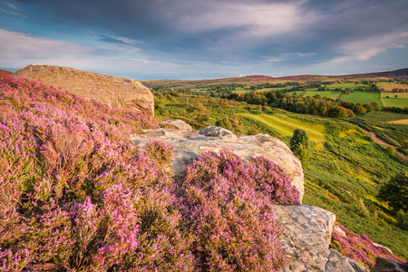 Rothbury Terraces Heather and Crags, which walk offers views over the Coquet Valley to the Simonside and Cheviot Hills, heather covers the hillside in summer