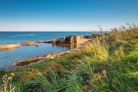 ハウィック ノーサンバーランドの海岸線の近くのゴロゴロのカーンで野生の花にある小さなビーチと小さな崖に入り江