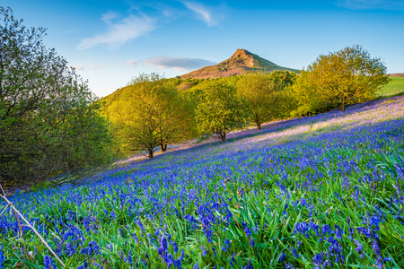 Bluebell Slope and Roseberry Topping, from Newton Wood, a distinctive hill in North Yorkshire, popular with walkers and ramblers