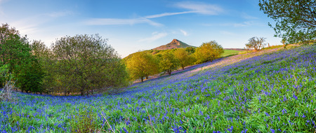 Bluebell Panorama below Roseberry Topping, from Newton Wood, a distinctive hill in North Yorkshire, popular with walkers and ramblers 免版税图像