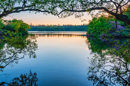 Bolam Lake Framed by Trees, in the Country Park located in the beautiful Northumberland countryside, it is surrounded by woodland seen here in early summer