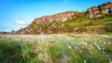 Cottongrass below Great Wanney Crag, on the edge of Northumberland National Park, is a remote escarpment popular for rock climbing and walking