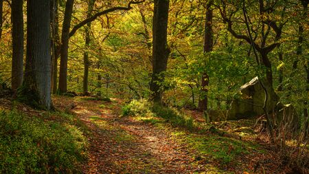 Autumn Walk through Morralee Wood, at Allen Banks and Staward Gorge in the English county of Northumberland which was a Victorian garden in a gorge of the River Allen cutting through woodland