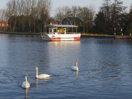 forground: a solar powered ferry boat crosses a river on a sunny winters day with swans in the forground