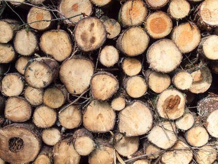 felled: detail of a pile of freshly felled logs Stock Photo
