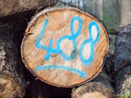 unsustainable: detail of a sawn log coded with the number 488 in blue paint Stock Photo