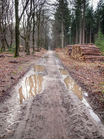 unsustainable: wet muddy  track through mixed woodland with puddles and stacks of freshly felled trees