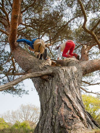 frienship: young children climbing in a pine tree on a sunny day Stock Photo