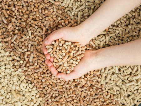 wood pellets: Childs hands cupping a handfull of wood pellets with three colours of woodpellet in the