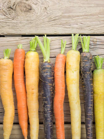 old fashioned vegetables: an arangment of heritage carrot varieties against a rustic knotted wooden background