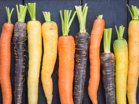 old fashioned vegetables: an arangment of heritage carrot varieties against a rustic dark grey wooden background