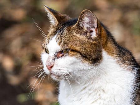 A portrait of a one eyed farm cat sitting beside a field near Yokohama, Japan.