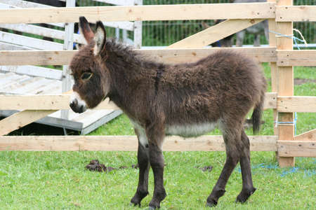 sanctuary:  donkey in a sanctuary