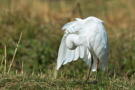 Governor Michael Gore Bird Sanctuary  tripadvisorcom