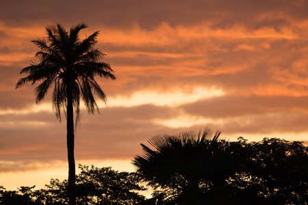 A West African sunset with palm tree silhouette