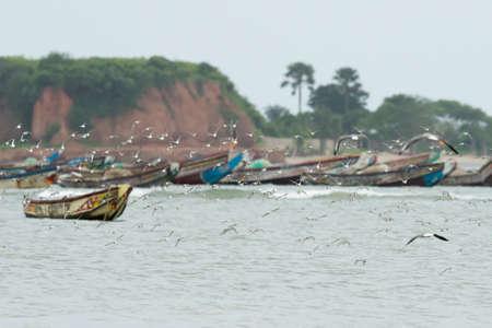 fishing fleet: A flock of sanderlings flying in front of an colorful African fishing fleet