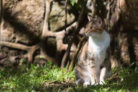 tri  color: Tri color house cat sitting in dappled light