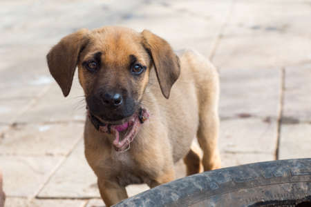 malawian: Little puppy looking plaintively at the viewer