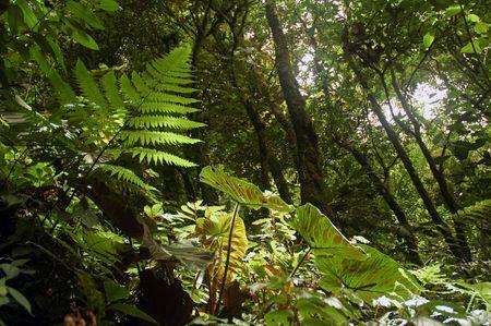 Rain Forest Floor Sunlight Standard-Bild