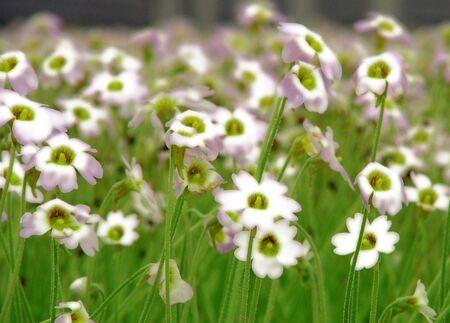 Picture Plant Flowers Reklamní fotografie