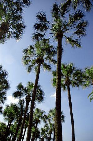 Tampa Palms Zdjęcie Seryjne