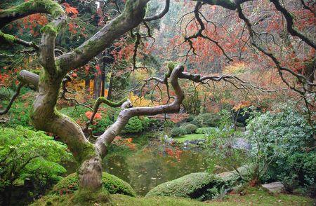 taoisme: Zen Bomen Stockfoto