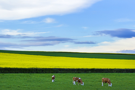 Landscape In Bourgogne in the countryside. Stock Photo