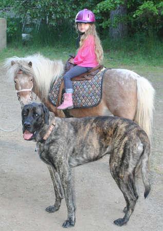 Young girl on pony with giant Mastiff dog